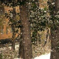 Снегопад, один из первых :: Ольга