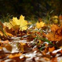 Последний день золотой осени :: Сергей
