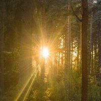 Вечернее солнце сквозь деревья :: Людмила Быстрова