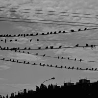 снова птицы в стаи собираются.. :: Ольга Заметалова
