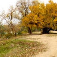 Осенняя панорама :: Анастасия сосновская