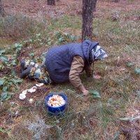 ох,нелёгкая это работа...грибы собирать... :: tgtyjdrf