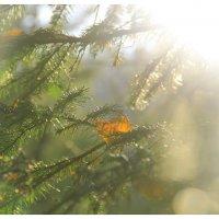 лес :: Анастасия