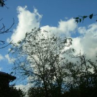 Орнаменты осени на фоне облаков :: татьяна