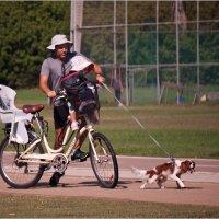 """Мир велосипеда-10 или """"Ездовая лаечка"""" :: Lmark"""