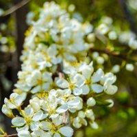 как много цветиков цветёт :: Света Кондрашова