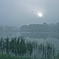 синий туман :: Елена