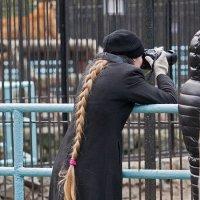 Дама с косичкой... :: Владимир Габов