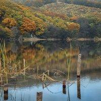 Как можно осень не любить? :: Natali Zima