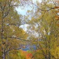 краски осени :: Елена Шульгина