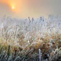 Солнцу навстречу....3 :: Андрей Войцехов