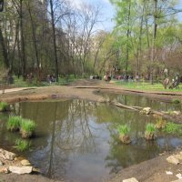 Пруд в ботаническом саду :: Дмитрий Никитин
