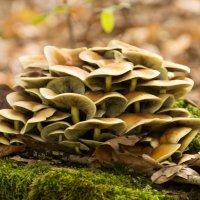 грибы :: Евгений