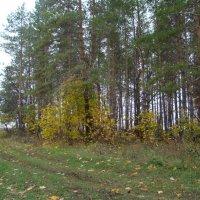 В лес за грибами :: марина ковшова