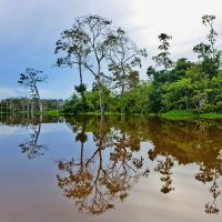 Перу. После рыбалки в заливной протоке Амазонки :: Андрей Левин