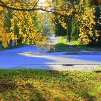 Осень скверы украшает позолоченной листвой. :: Валентина ツ ღ✿ღ