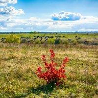 Осень на пастбище :: Юрий Шапошник