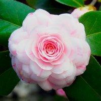 Цветок. :: Лариса Журавлева