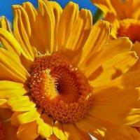 Ярче яркого солнца :: Валентина Пирогова