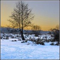 Одинокое дерево :: Дубовцев Евгений