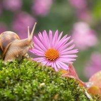 Цветок,улитка, осень. :: Алексей Яковлев