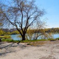 Вода и пустые деревья :: Света Кондрашова