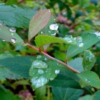 после дождя :: elena манас