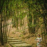 Фотосессия в бамбуковом лесу :: Pavel Shardyko