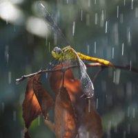 нелётная погода :: Алена Рыжова