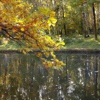 Осенняя ветка... :: анна нестерова