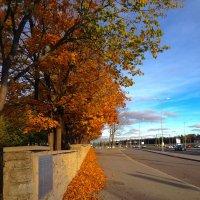 Осень в желтизне :: Оксана Акильева
