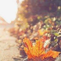 Осенний лист :: Галина Фуникова
