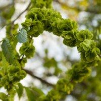 Свежая зелень :: Лидия (naum.lidiya)