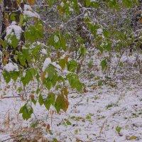 Первый снег---14 :: Владимир Холодный