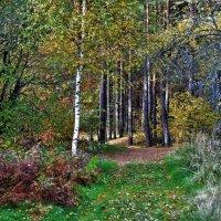 В лесу. :: Новиков Игорь