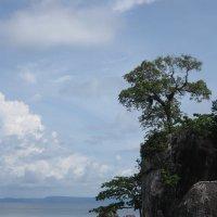 У берегов Южно-Китайского моря :: Лариса (Phinikia) Двойникова