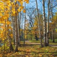 Золотая осень в парке 3 :: Виталий