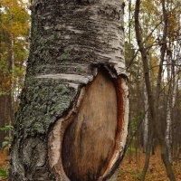 Окно в мир ботаники :: Андрей Лукьянов
