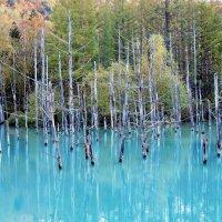 Япония. Хоккайдо, Голубой пруд Биэй (Blue Pond Biei) :: Tatiana Belyatskaya