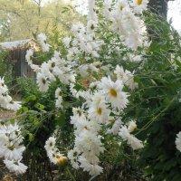 Последние цветы осени :: Танцюра Татьяна