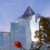 Небесное блаженство роза символизировала в средневековом христианском искусстве. :: Anna Gornostayeva