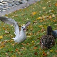 сердитая чайка :: Наталия П