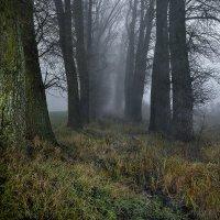 Выбор есть всегда... но иногда очень туманный... :: Александр Бойко