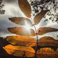 осень :: Александра Тетерина