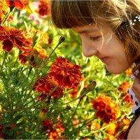 Летние цветы... :: Дмитрий Петренко