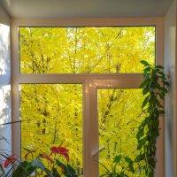 Золотая осень за окном :: Сергей Тагиров