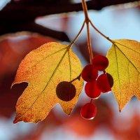 Осень :: Валерий Князькин