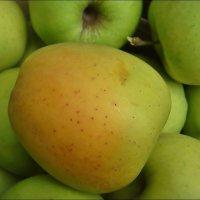 Румяное яблочко :: Нина Корешкова