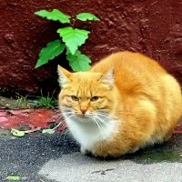 Осенний кот. :: Елена