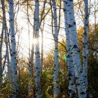 Вот и осень пришла... :: Виталий Комаров